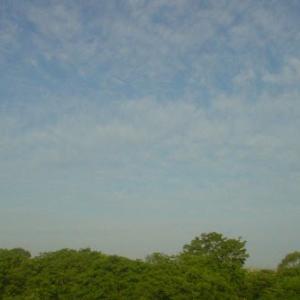 お気に入りの散歩道:# Sky Watch Friday