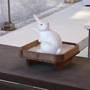 KT参拝223社目 宇治川沿いに御鎮座 みかえり兎で有名な「宇治神社」のご紹介