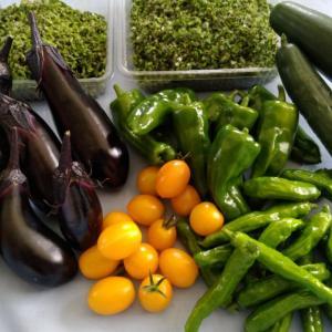★更新★ 自給自足の野菜たち…今日の収穫です。