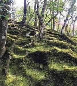 銀閣寺 庭園の苔が美しい理由 the inspiration came from  Kokedera; the Moss Temple.