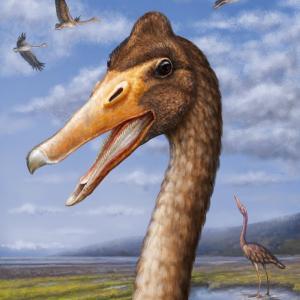 暁新世初期の南極からカモ類初期進化の鍵となる証拠