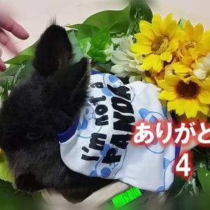 ありがとう 4  (たいじゅうそくてい)