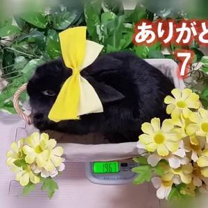 ありがとう 7  (たいじゅうそくてい)