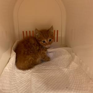 愛猫ふうが永眠いたしました。 6月6日