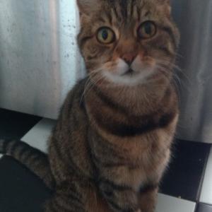 ご近所の猫トリオに感謝!