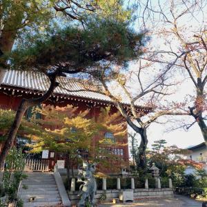 紅葉を纏う如来寺の仁王像と今日の豊川稲荷東京別院