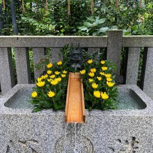 重陽の菊献花と不運は未だ続く⁉︎