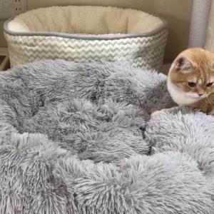 ニトリの冬用ベッド