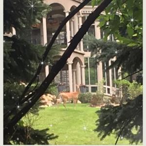 鹿にも効くね、ハロー効果。と、Zoomセッション