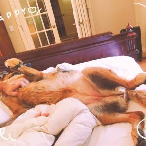 MI-Combatで誕生会★お嬢様(犬)のHappy日曜日