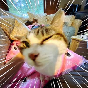 Aさんの猫さん、お空へ★老猫の攻防