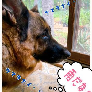 雨の日のお嬢様(犬)とがっちゃん(猫)