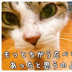 庭と家庭菜園★まあ子(猫)★プレコ忘備録