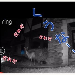 監視カメラRingで鹿に怒鳴る