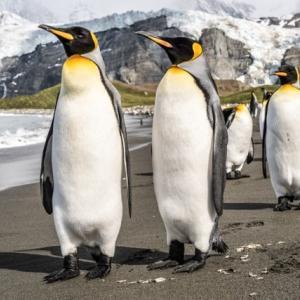 「ペンギン×ステンドグラス」の件