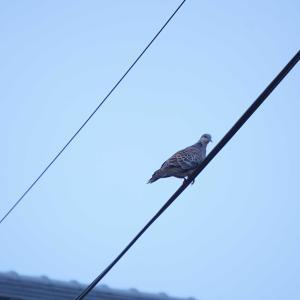 今朝の野鳥観察