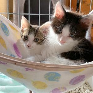 なんてことない100均グッズが意外と猫生活に使える。