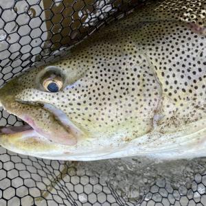 猿払川イトウ釣りおすすめルアーランキングTOP5