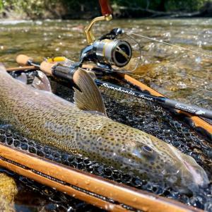 渓流のイトウ釣り