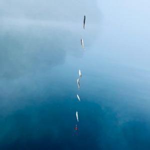 関東で美味しいワカサギを釣るなら芦ノ湖はどうでしょう!