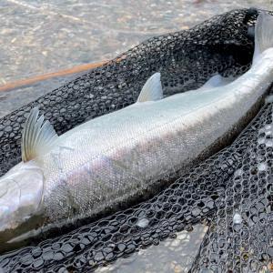 一人旅11.阿寒湖のサクラマス釣り。ポイントとルアー