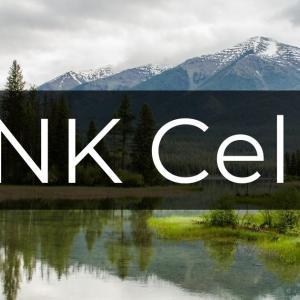 がんを予防する!緑地はNK細胞を活性化・増殖させる