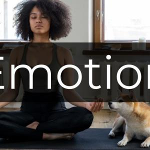 瞑想で感情をコントロールせよ