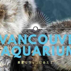バンクーバー水族館に行って癒されよう!