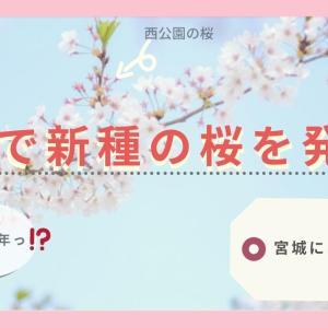 【野尻】秋保で新種の桜を発見!