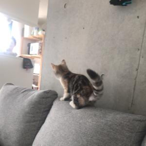 活発な借りてきた猫