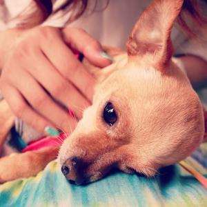 【老犬】愛犬の介護に使えるグッズ【人間用】