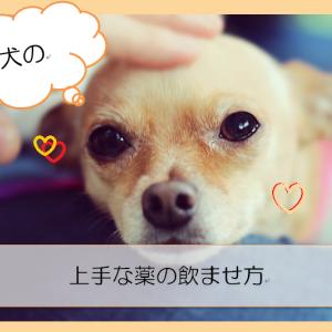 【犬】上手なお薬の飲み方【薬を吐き出さない工夫】