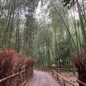 【夜行バスでいく】嵐山-京都えまる旅