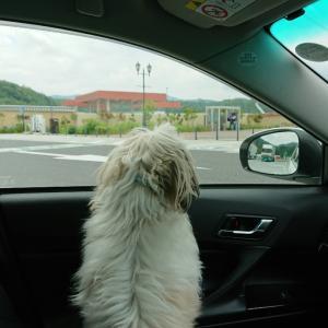 愛犬とドライブ