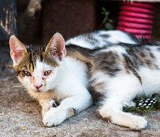 毒エサで大量虐殺『北九州市の猫』40匹以上が!80代の犯人逮捕【離島オカルト】