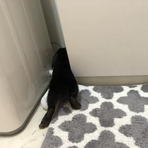 [うさぎ]シャワーを待つウサギ栞