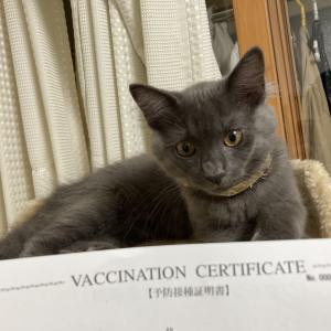 [ねこ]紬、初めての注射!予防接種は大変。。。
