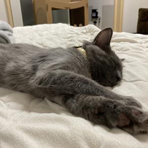 [ねこ]天然目覚まし猫