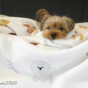 Bow-Wow Blanket