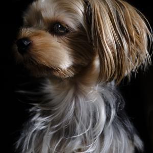 Portrait of Wanko