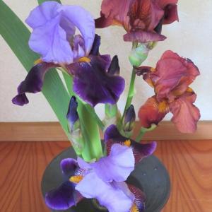 花瓶 あやめ Vase, Iris
