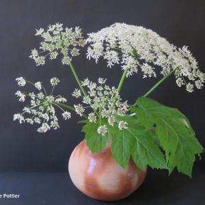 壺 ハナウド Vase, and Heracleum nipponicum