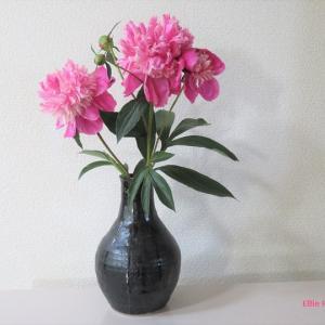 花瓶 シャクヤク Vase, and Peony