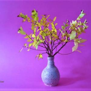 花瓶 シモツケ Vase, and Japanese Spiraea