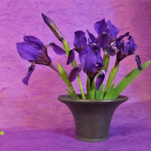 花器 三寸あやめ Vase, and Iris