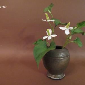 花入れ ドクダミ  Vase, and Houttuynia cordata