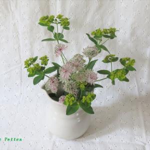 水差し アストランティア・マヨール Pot, and Astrantia