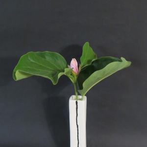 花入れ 真夏のモクレン Vase, and Magnolia in midsummer