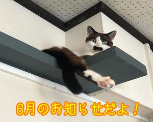 6月のお知らせ!だよっ!!