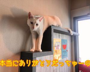 パトロン様へ&東京へ!?だよっ!!(6月分)